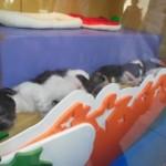 Macy's Puppies